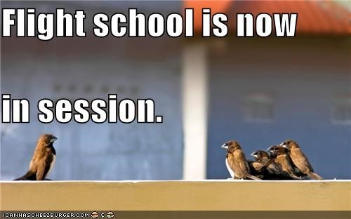 animals,birds,class,flight school,pay attention,school