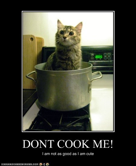 cat-cooking cook dont-cook-me get out of there cat I Can Has Cheezburger pots and pans