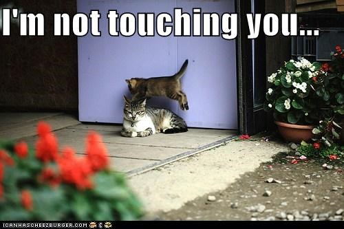 annoying caption captioned cat Cats im jumping not not touching teasing touching you - 5507773184