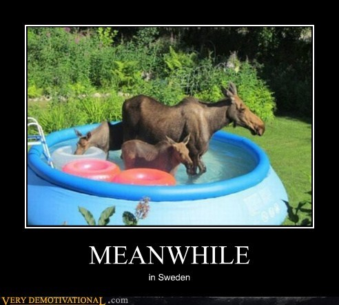 animals,hilarious,Meanwhile,moose,pool,wtf