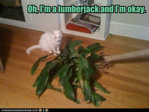 cat,house plant,I Can Has Cheezburger,lumberjack,oops