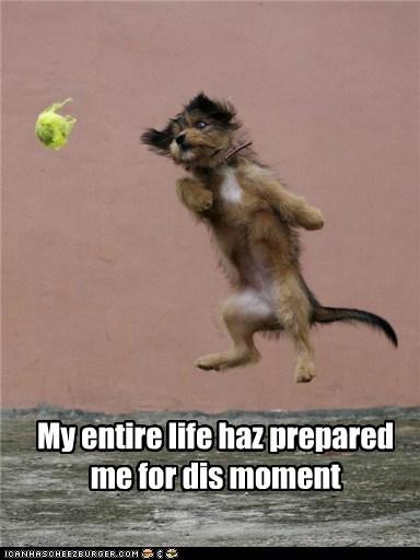 ball jumping leap playing - 5509401600