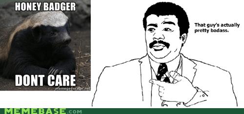Badass badger give a darn honey-badger-dont-care - 5509943040