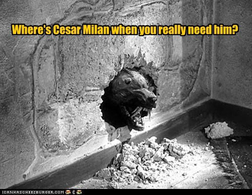 Where's Cesar Milan when you really need him?