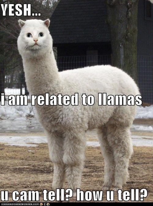 YESH... i am related to llamas u cam tell? how u tell?