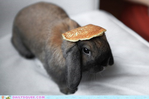 acting like animals balancing bunny continuation flapjack happy bunday head morrissey pancake song that-joke-just-isnt-funny-anymore the smiths - 5510500096