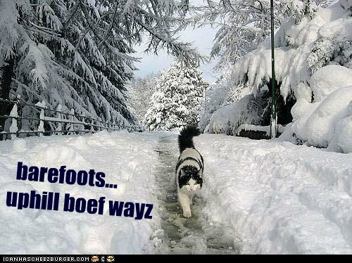 barefoot caption captioned Cats complaining complaints Grandpa in MY day snow stories uphill whining winter - 5510519040