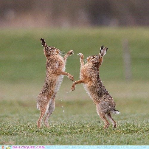 acting like animals,classic,hair raising,happy bunday,hare,hares,literalism,pun,raising