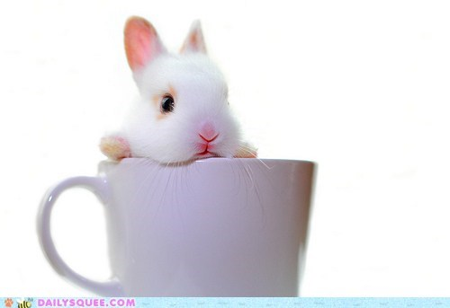amusement park baby bemusement bunny do not want grumpy Hall of Fame happy bunday pun rabbit ride teacup tiny - 5510534656