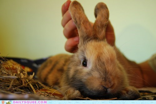 assistance bunny bunny ears ears form happy bunday help holding human practicing rabbit shape training - 5510556160