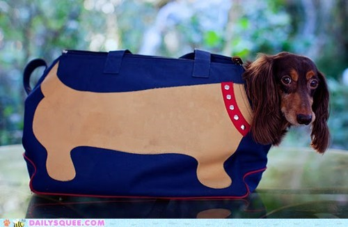 acting like animals bag better dachshund dogs dog bag leftovers literalism pun replacement shape superior