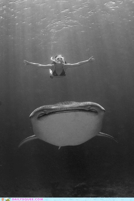 acting like animals better can catch me if you can counter desire diver potential question scuba diving whale shark will - 5510661376
