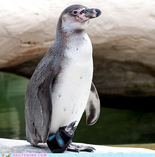 acting like animals adorable custom designer humboldt penguin penguin rehab sandal teva - 5510676480