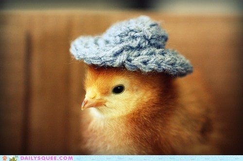 accessory,amazing,baby,bird,cap,chick,dressed up,hat,jealous,Knitted