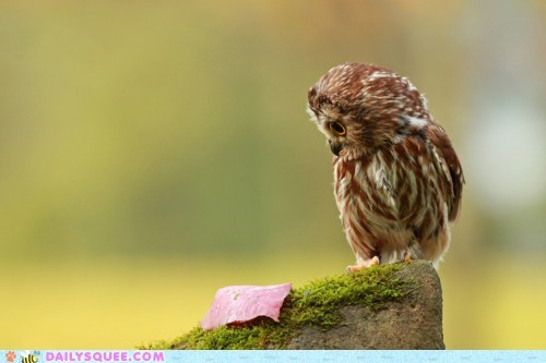 baby confused curiosity killed the cat idiom meat noms Owl owlet Staring wide eyed - 5510803968