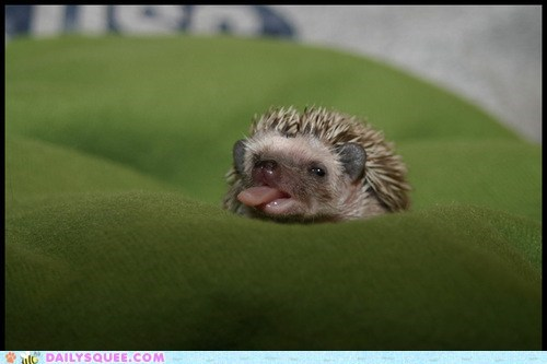 adorable baby expression face funny face Hall of Fame hedgehog sticking out tongue unbearably squee - 5510820096