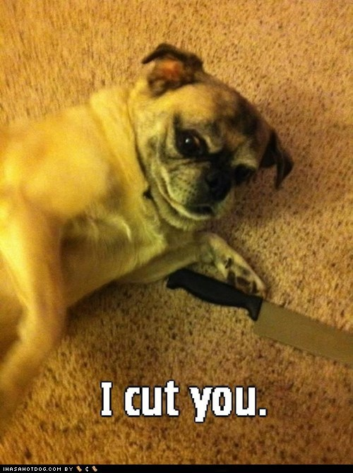 dogs,i cut you,i has a hotdog,knife,pug