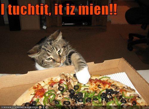 Cheezburger Image 5511875584