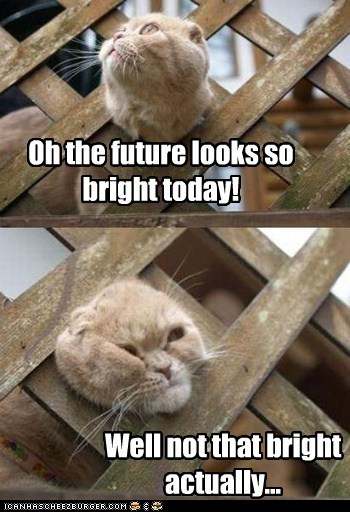 bright caption captioned Cats fence head multipanel optimism optimistic stuck the future - 5512232448