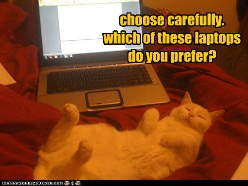 caption captioned Carefully cat choose decision laptop laptops options preference question trick question which