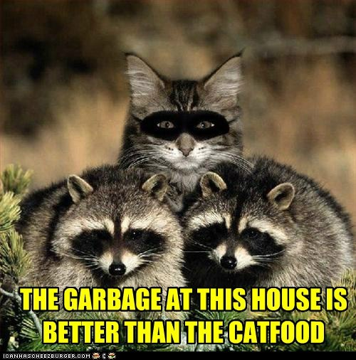 cat,disguise,disguised,food,I Can Has Cheezburger,noms,raccoon,raccoons,sneaky