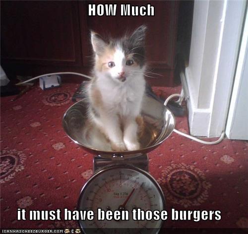 Cheezburger Image 5512606976