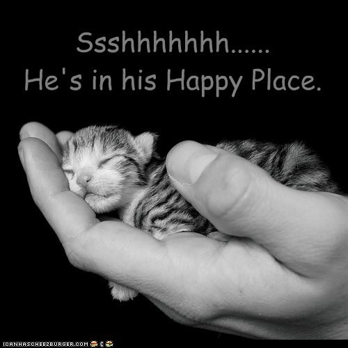 asleep best of the week caption captioned Cats Hall of Fame hands happy happy place holding hoomins kitten sleeping squee tiny - 5512806144