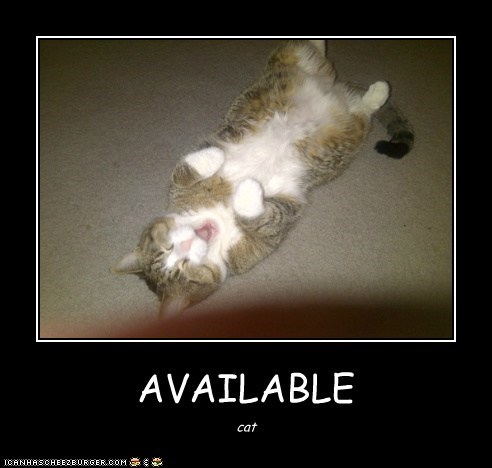 AVAILABLE cat