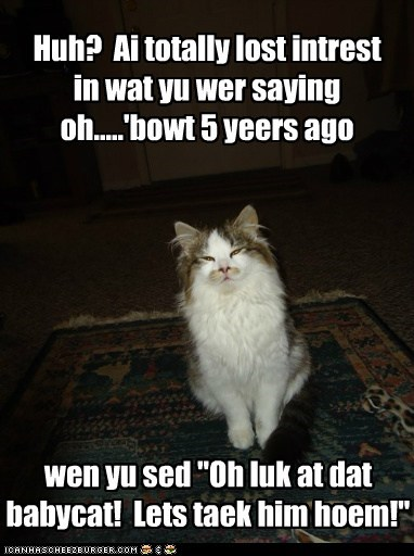 """Huh? Ai totally lost intrest in wat yu wer saying oh.....'bowt 5 yeers ago wen yu sed """"Oh luk at dat babycat! Lets taek him hoem!"""""""