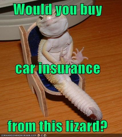 animals car insurance gecko GEICO lizard - 5514923520