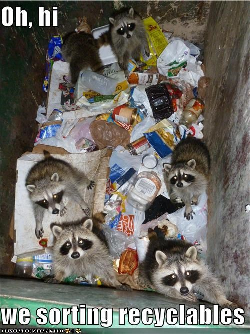 activity best of the week caption captioned hi Oh ohai raccoon raccoons recyclables recycle recycling sorting we
