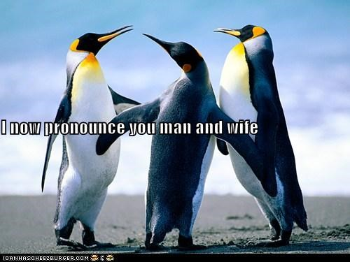 caption captioned marriage married marry now ordainment penguin penguins pronounce speech wedding