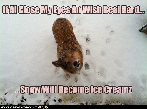 corgi,ice cream,make a wish,outdoors,sheltie,snow,whatbreed,wish
