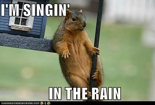 animals,cary grant,class act,Singing in the rain,squirrel