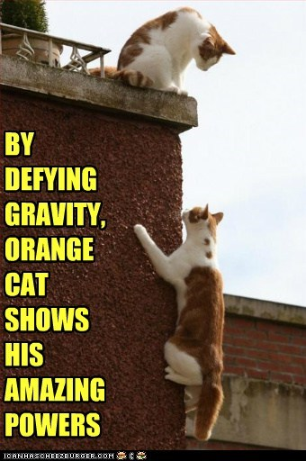 BY DEFYING GRAVITY, ORANGE CAT SHOWS HIS AMAZING POWERS