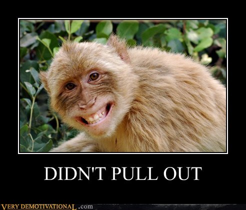 animals,hilarious,monkey,pull out,troll