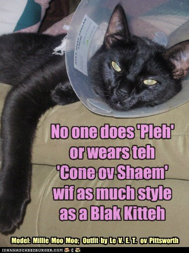 No one does 'Pleh' or wears teh 'Cone ov Shaem' wif as much style as a Blak Kitteh Model: Millie Moo Moo; Outfit by Le V. E. T. ov Pittsworth