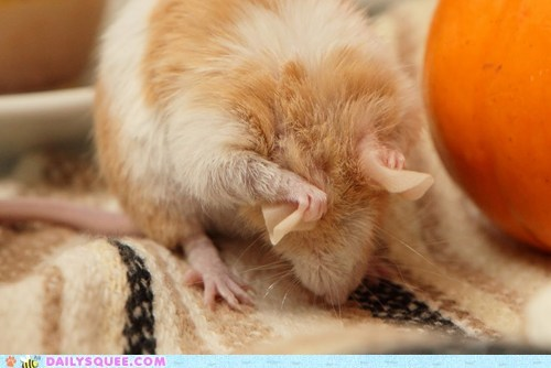 baby cleaning do not want grooming lolwut nickelback rat reader squees write up - 5519547904