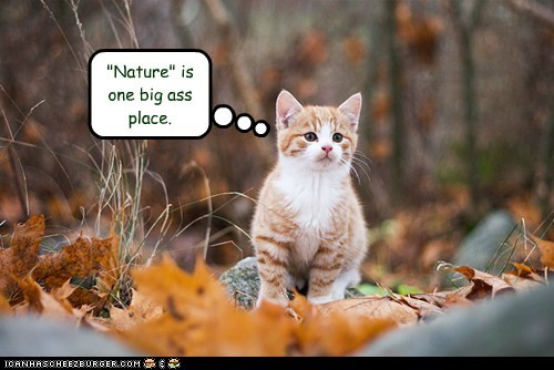 ass,caption,captioned,Cats,do not want,nature,outdoors,outside,unhappy