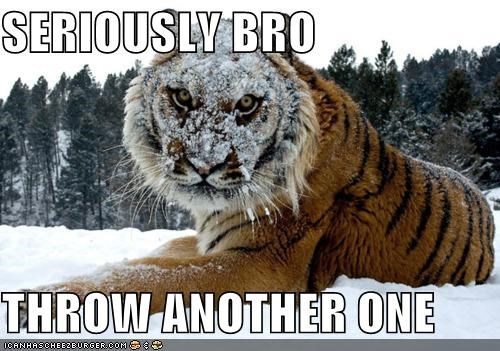 big cats,bro,caption,captioned,i dare you,seriously,snow,snowballs,throw,tigers