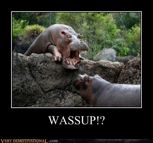hilarious hippo wassup-yelling - 5521085696
