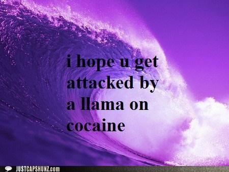 christmas wish i-dont-get-it llama llama on cocaine ocean wave wtf - 5521434368