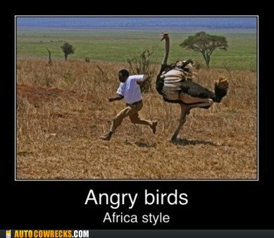africa angry birds AutocoWrecks birds game g rated Hall of Fame mobile phones ostrich video gmaes - 5521693952