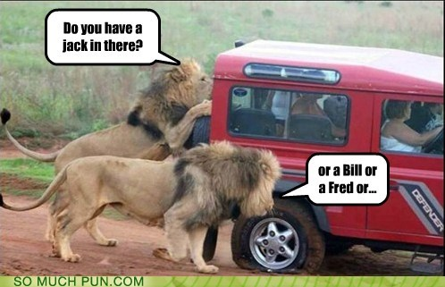 assistance,dinner,double meaning,flat,humans,jack,jeep,lion,lions,name,question,safari,tire,tool