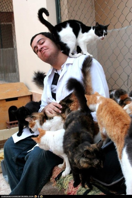 amazing,animal haven shelter,awesome,best of the week,egypt,kindness,lots of cats,o-the-places-youll-go,rescue,shelters,win