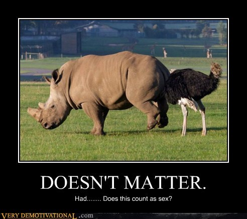 doesnt matter hilarious ostrich rhino wtf - 5522186240