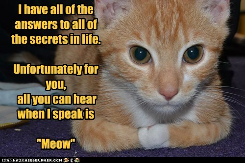 all answers caption captioned cat have hearing life meow secrets speak tabby translation unfortunately