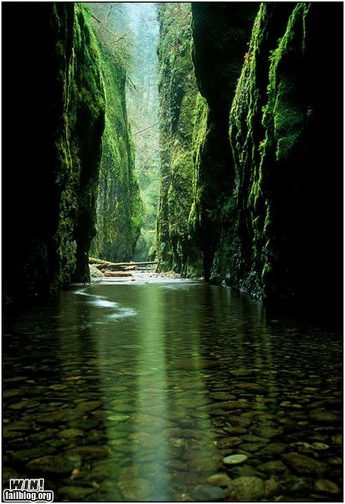 creek Forest green grotto grove of the burnwillows mother nature ftw river shimmering grotto - 5522990080