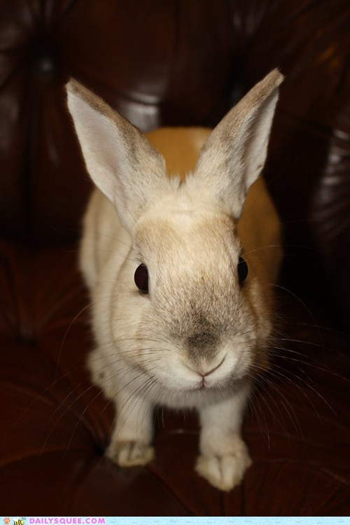 approval,approving,bunny,camera,curious,examining,happy bunday,inspecting,rabbit,reader squees,sniffing