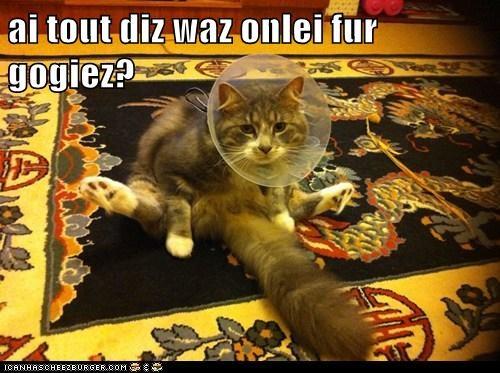 Cheezburger Image 5523291136